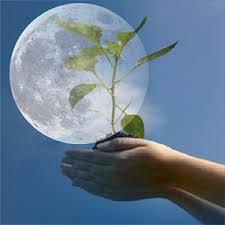 Місячний посівний календар з вирощування городніх рослин на 2014 рік thumbnail
