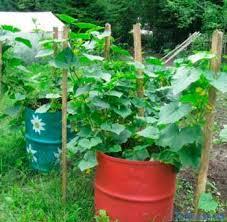 Вилікуй землю – не будуть хворіти рослини