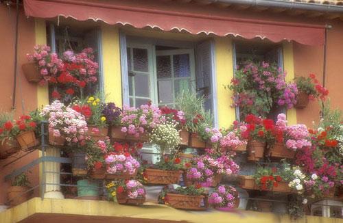 Як перетворити балкон в оранжерею