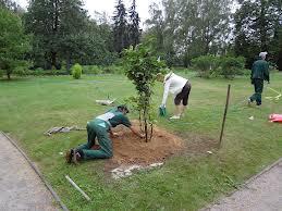 На яку глибину слід обробляти грунт у пристовбурних кругах плодових дерев?