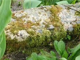 Як позбутися від моху на деревах?
