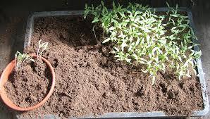 Фенологічний календар підкаже терміни висівання насіння