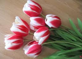 Тюльпани. Агротехніка, хвороби і шкідники, вигонка