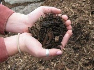Мульчування грунту — користь рослинам і полегшення затрат праці