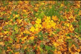 Опале листя пригодиться для покращення родючості грунту