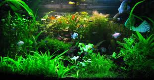 Секрети акваріумістики знання яких зробить ваших рибок веселими та здоровими