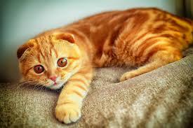 Як і чим правильно годувати кота і кішку — рекомендації фахівців
