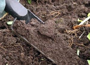 Осіння підготовка грунту