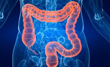 Вчені виявили нові функції мікроорганізмів що мешкають в кишечнику
