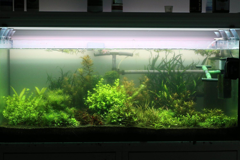 Домашній акваріум і його мешканці