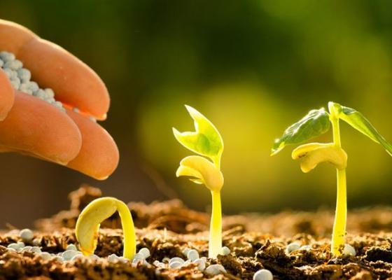 Чи можна виростити гарні врожаї без використання мінеральних добрив?
