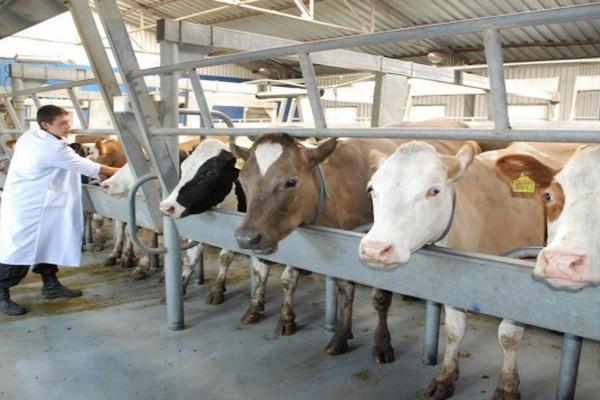Надійна техніка для ветеринарії і тваринництва від Biovet
